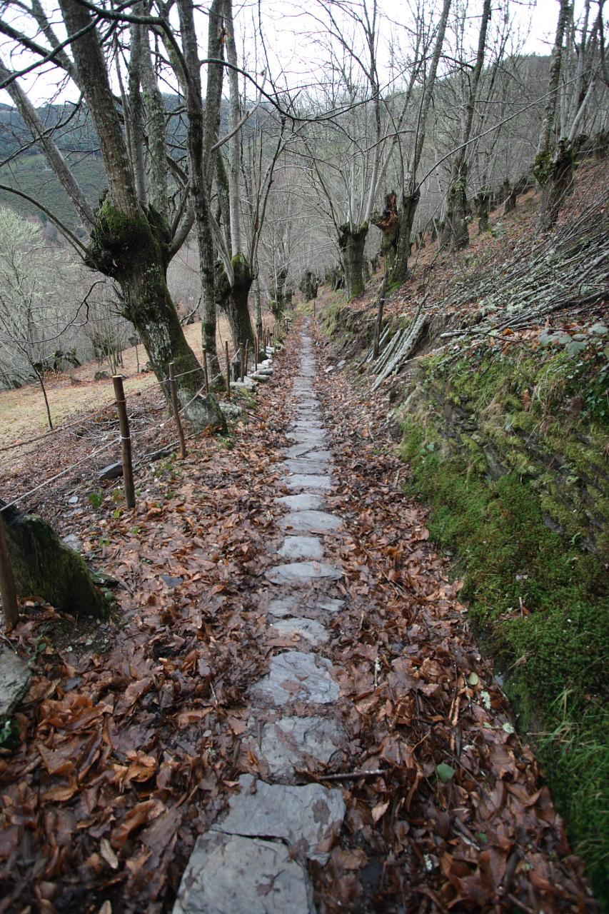 Camiño cara ao castro e a ermida