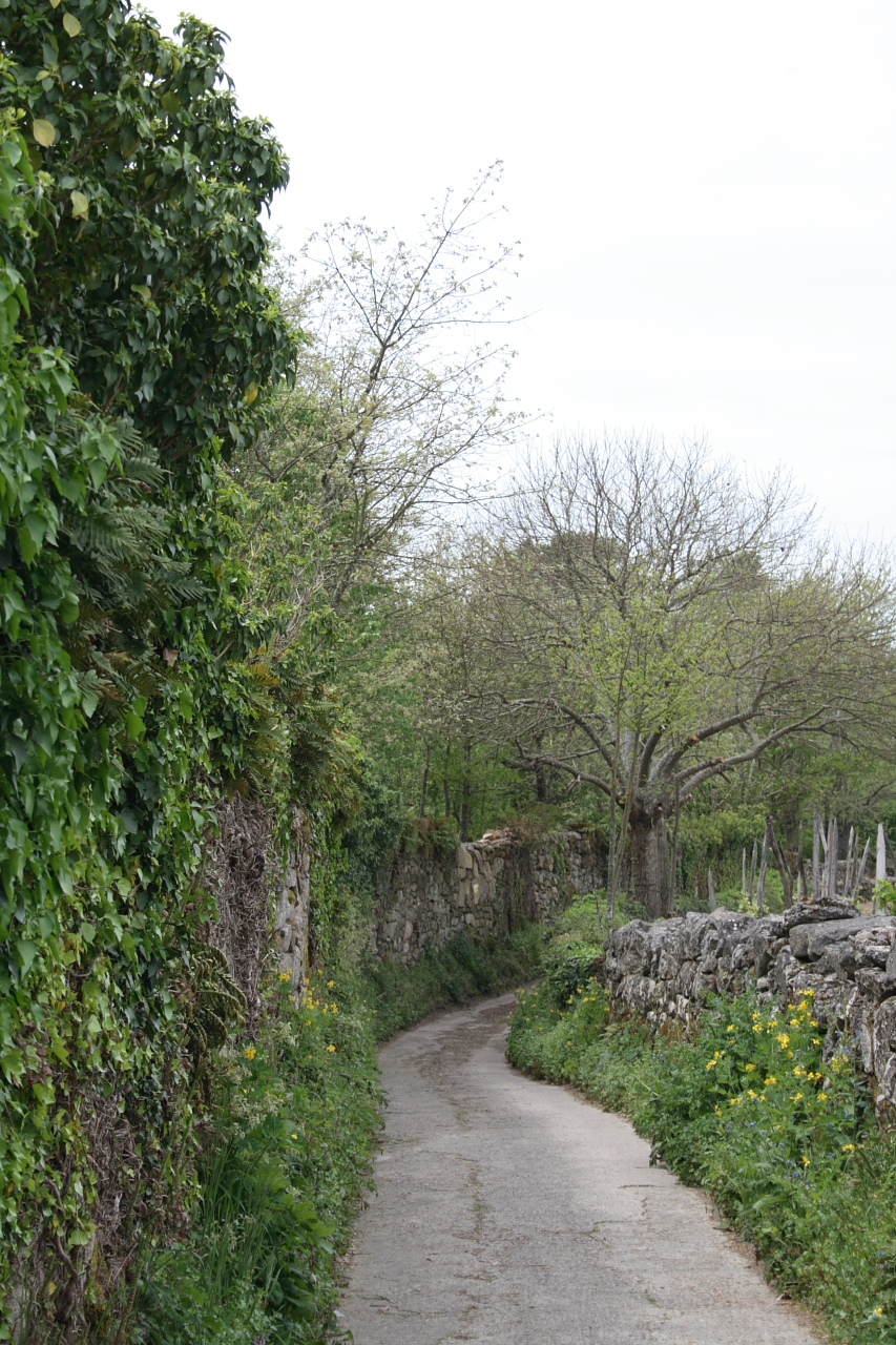 Camiño detrás do pazo